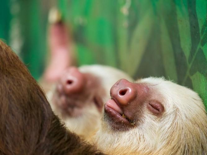 ¿Sabes Cuál Es El Animal Que Más Duerme? ¡Descúbrelo!