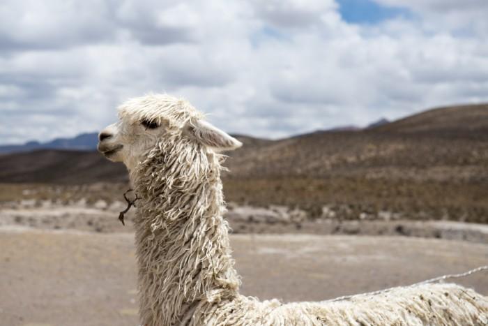 Curiosidades Peru