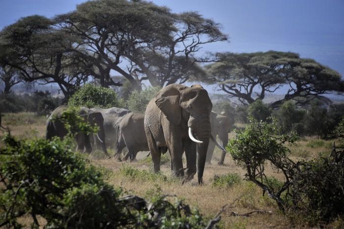 Paises De Africa Y Superficies